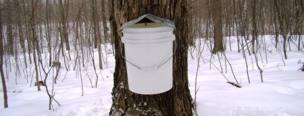 It's sugarbush season at Blandford Nature Center.