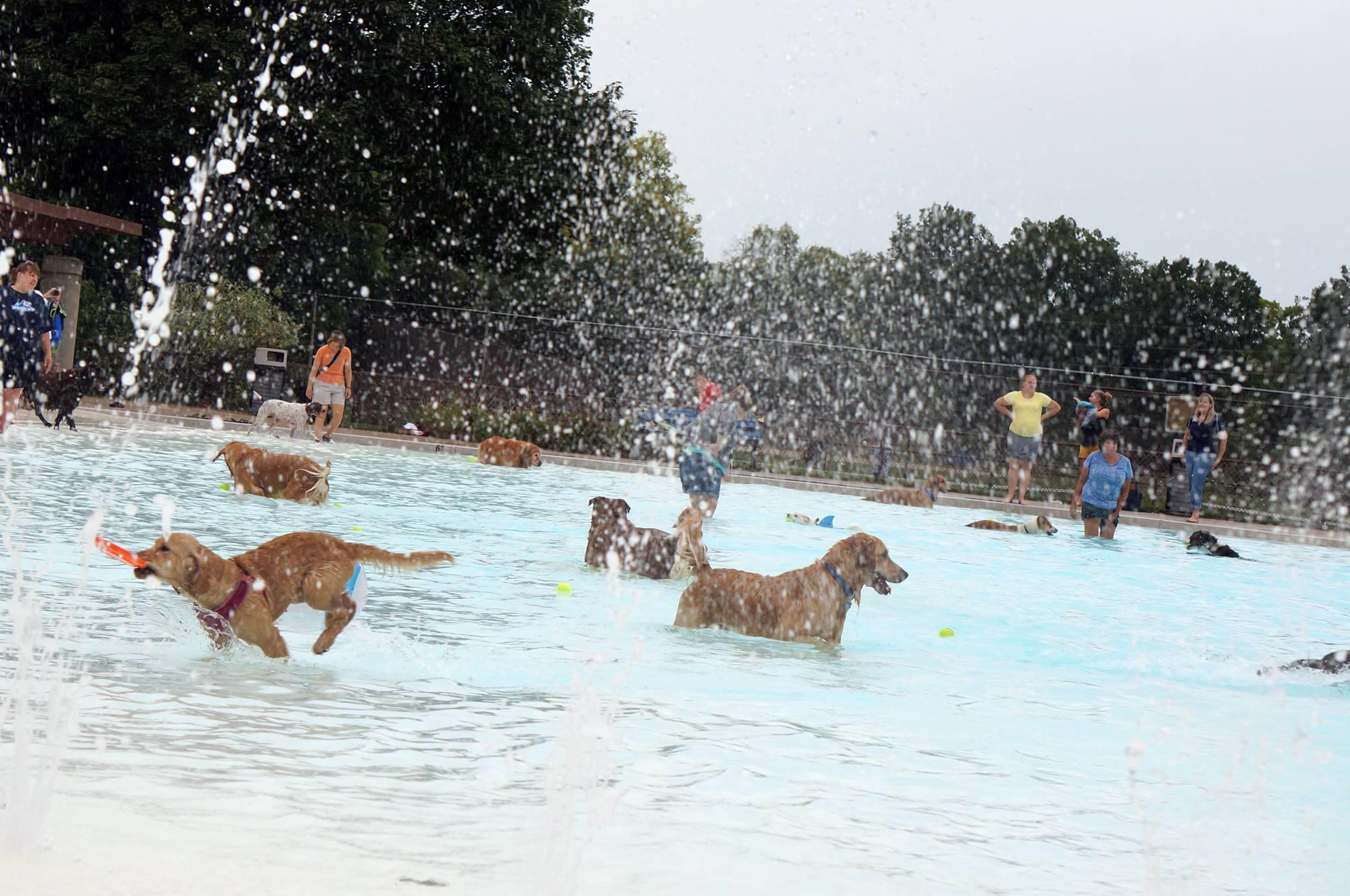 Grand Rapids Parks & Recreation hosted Wag 'n' Wade in 2017.