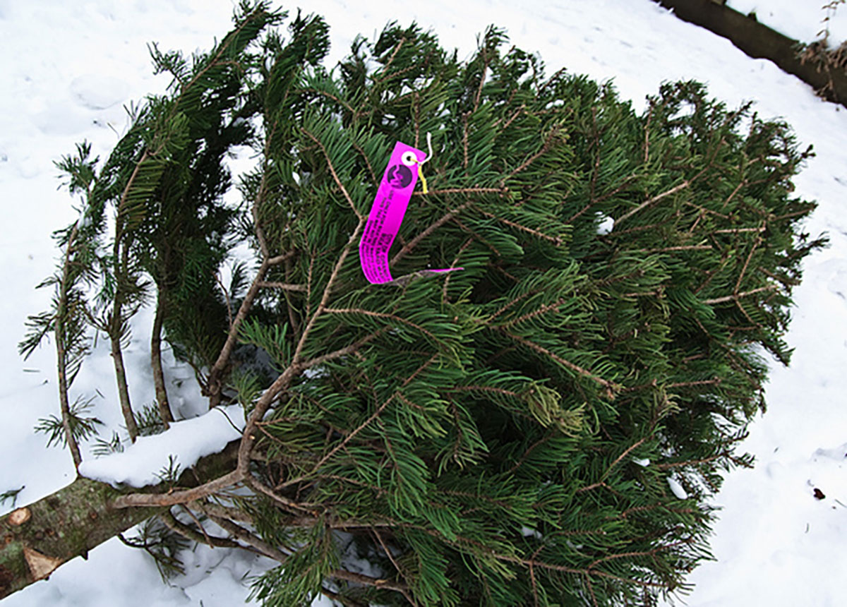 Dispose Of Your Christmas Tree In Grand Rapids