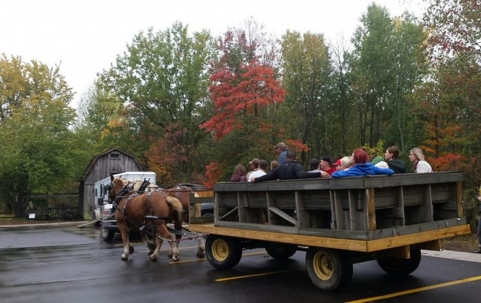 Blandford Nature Center Harvest Festival horse-drawn wagon ride
